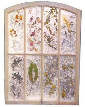 SJ56 seaweed window trnasparent-350H